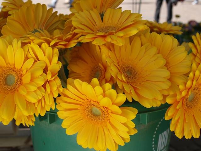 Eiscrme und Blumen Der Frhlingsanfang in Trier  5vierde