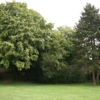 Palastgarten Bäume Füllbild, Foto David Benke - 5VIER