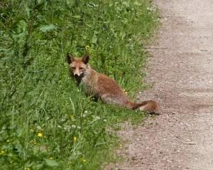 Fuchs-Blick