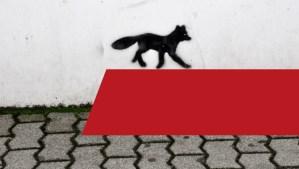 Titelbild_Schwarze_Füchse - 5VIER