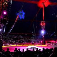 Zirkus - 5VIER
