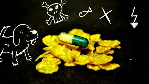 Vergifteter Hund