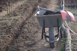 Hier werden Beete für Spinat, Zwiebeln und Bohnen angelegt.