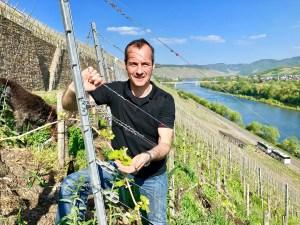 Ökologischen-Weinbau-betreit-Winzer-Martin-Conrad-in-der-Steillage-Brauneberger-Juffer - 5VIER