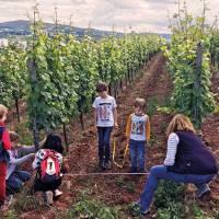 Faszination Weinberg: Ein Naturerlebnis für die ganze Familie