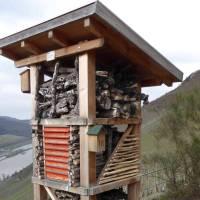 100 Lebenstürme für die Mosel – Hotspots für Flora und Fauna