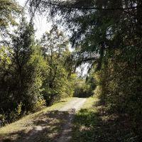 Der Naturpark-Wanderweg 15: TI Islek, Foto: Zweckverband Naturpark Südeifel