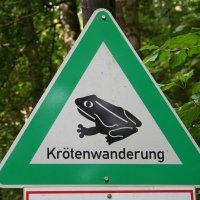 Schon bald fängt die Krötenwanderung wieder an. Bildquelle: pixabay.com
