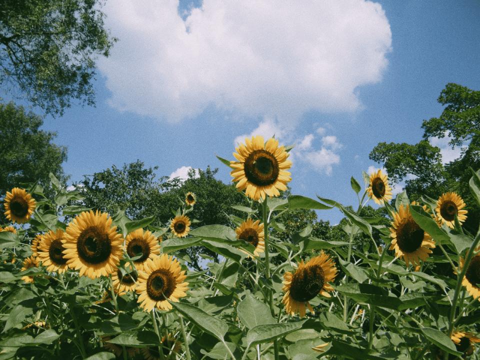 Symbolbild: Blumenwiese im Frühjahr und Sommer - Bild: Photo by summertrain on Unsplash