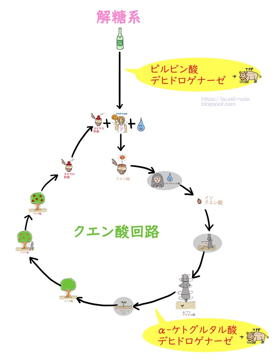 チアミンピロリン酸 - Thiamine pyrophosphate - JapaneseClass.jp