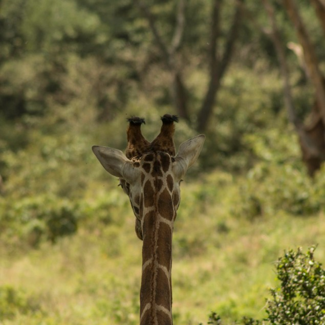 Karen Giraffe Centre