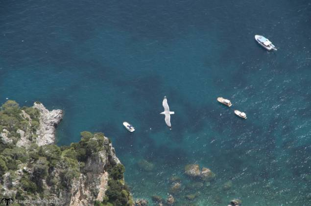 A dove and boats in a bay seen from the top of Monte Solaro