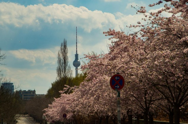 Cherry-blossoms at the Berlin Wall trail with a view of the TV tower.