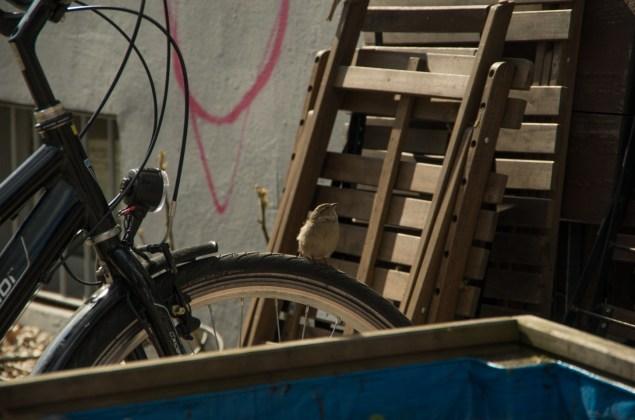 spatz-fahrrad-6666