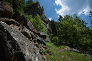 Trees find the smallest space to grow on this stone cliff in the Austrian Dolomites,