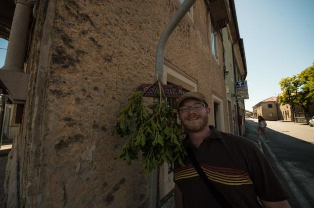 Mistletoe pointing the way to an open Osmiza