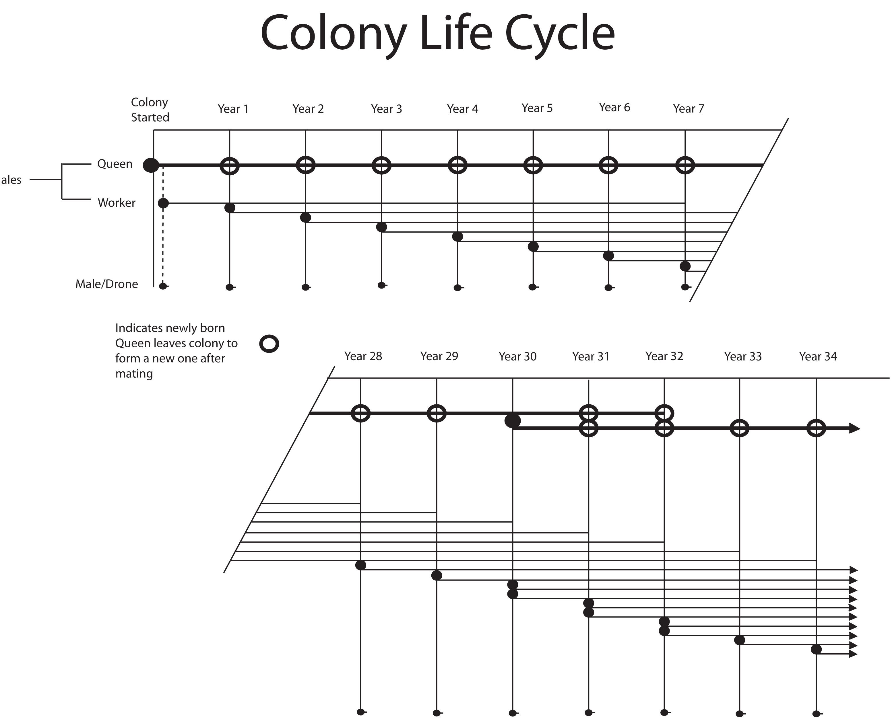 diagram of an ant life cycle worksheet cotton plant anatomy lecture 02 diagramming abstraction