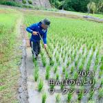 田んぼの草とり募集
