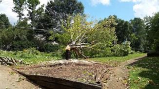 Tree was diseased - had to cut it down