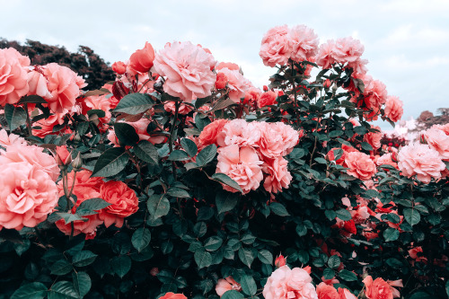 The best hd nature wallpapers download for android. red flowers aesthetic | Tumblr