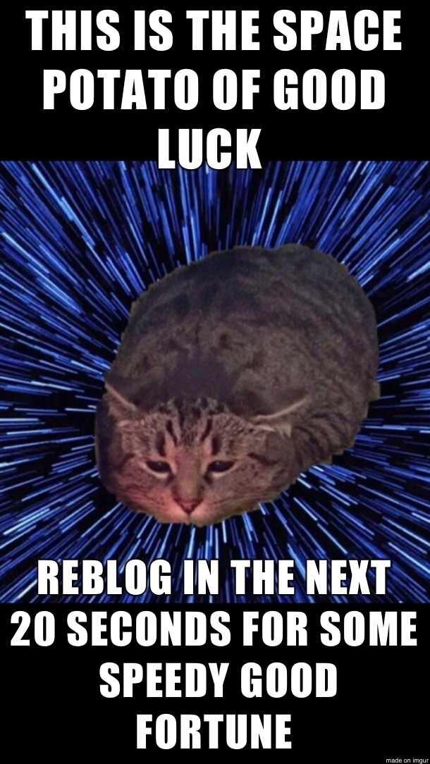 Potato Cat Meme : potato, Cutest