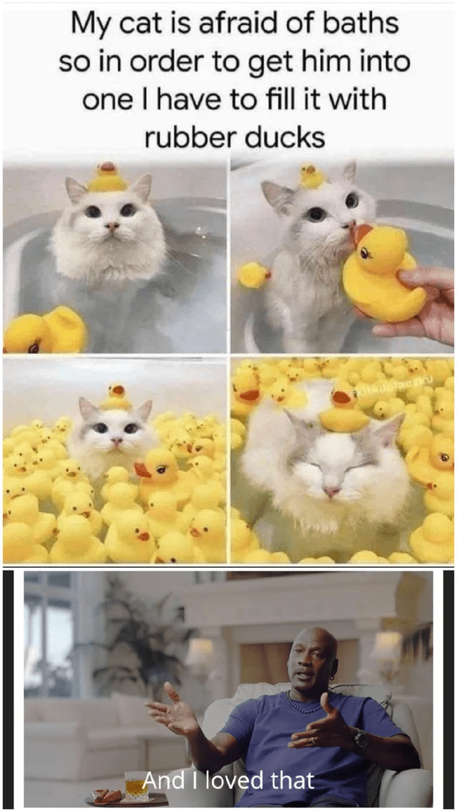 Blessed Cat Images : blessed, images, Blessed_images, Blessed