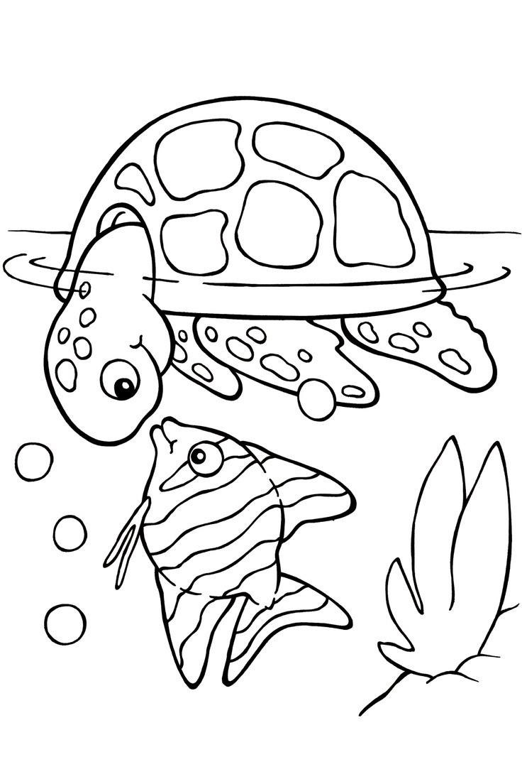 Gambar Kura Kura Untuk Mewarnai : gambar, untuk, mewarnai, Mewarnai, Gambar, Binatang, Kura-kura