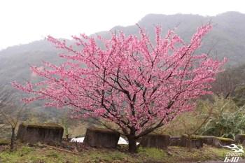 [2013櫻風暴] 花園新城。闖進盛開的粉紅祕境