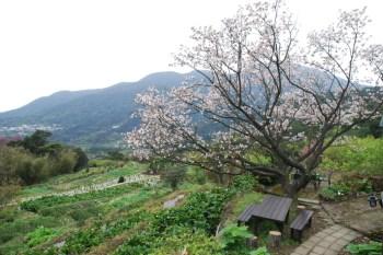 [2011賞櫻] 秘密基地 幽雅的賞櫻