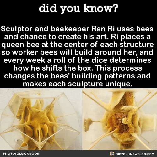 Sculptor and beekeeper Ren Ri uses bees and chance to create his art. Ri places a queen bee at the center of each structure so worker bees will build around her, and every week a roll of the dice determines how he shifts the box. This process changes...