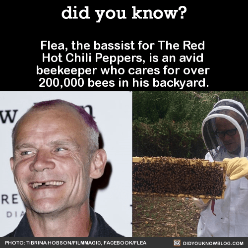 Flea, the bassist for The Red Hot Chili Peppers, is an avid beekeeper who cares for over 200,000 bees in his backyard. Source