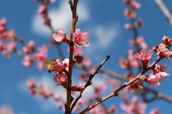 spring seeing4