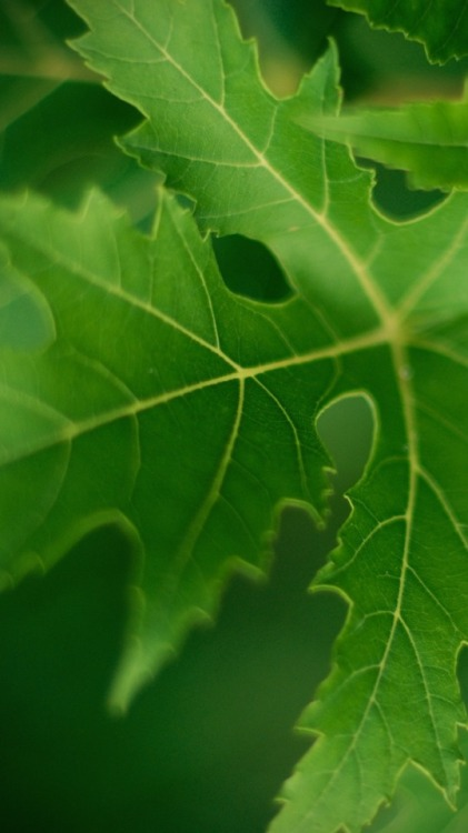 Wallpaper Lockscreen Cute Green Leaf Wallpaper Tumblr