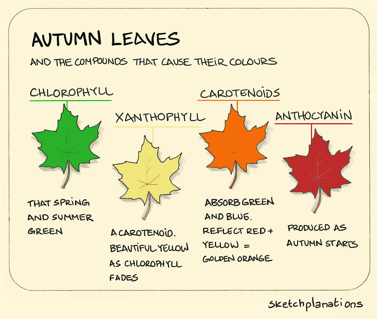 Autumn Leaves And The Compounds That Cause Their