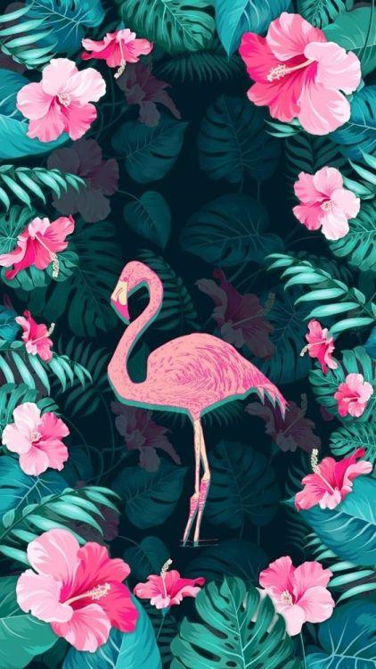 Cute Cats Wallpapers For Iphone Flamingo Wallpaper Tumblr