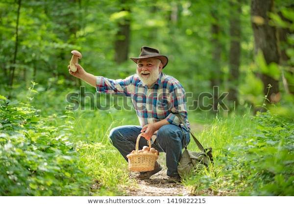 Old bearded man squatting on the forest floor, holding a mushroom aloft and smiling.