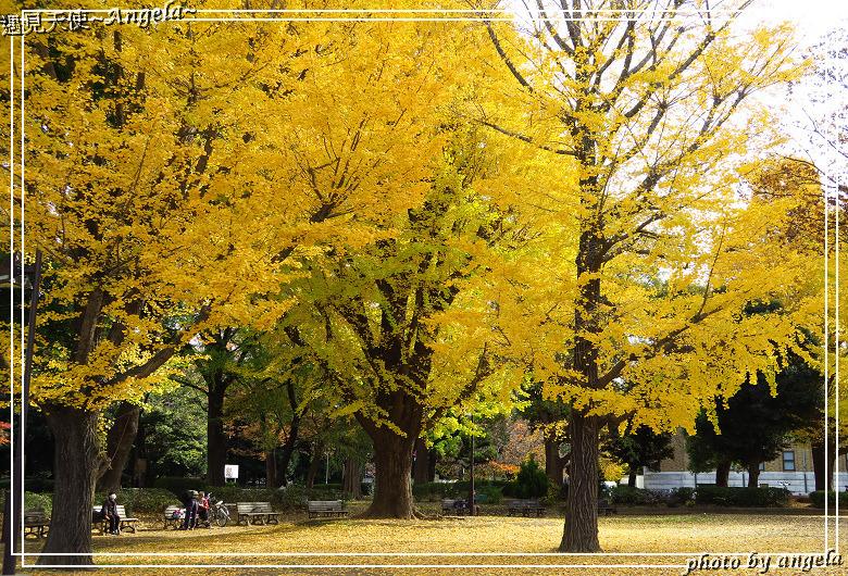 Angela 愛旅行 — 東京自助 - 上野公園賞楓之銀杏比紅葉更亮眼更漂亮!