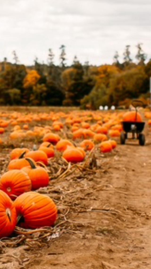 Fall Pumpkin Background Wallpaper
