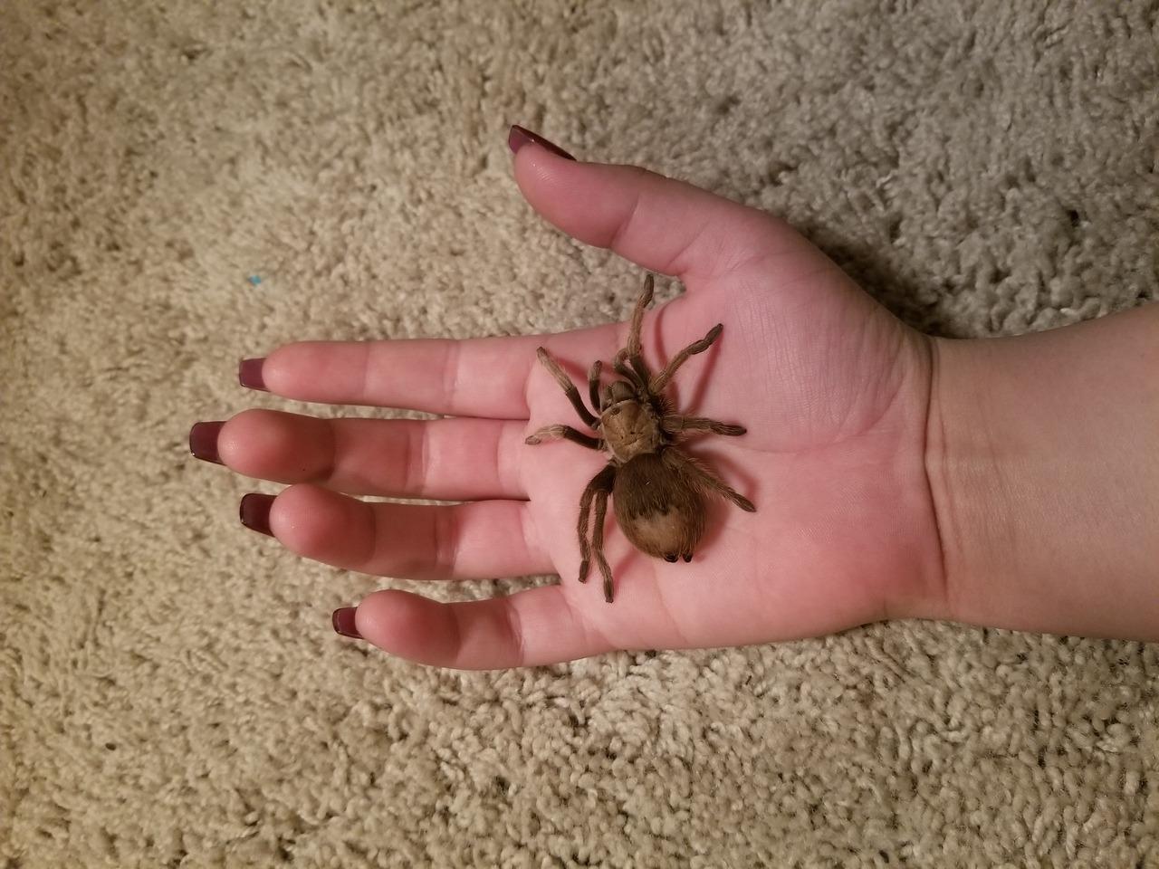 new tarantula tumblr posts