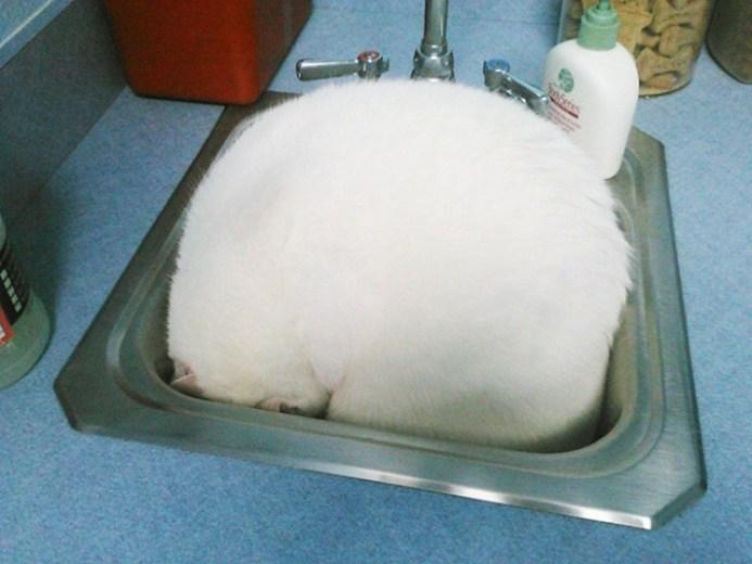 Gatos escondidos en el veterinario