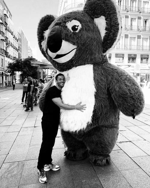 Koalas in Madrid  @lukesax 1