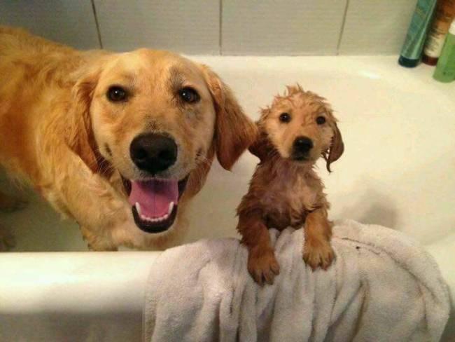 Recopilatorio perretes bebés