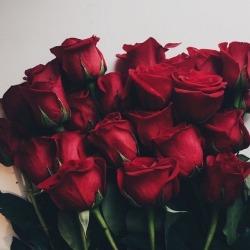 Red Rose Tumblr Aesthetic