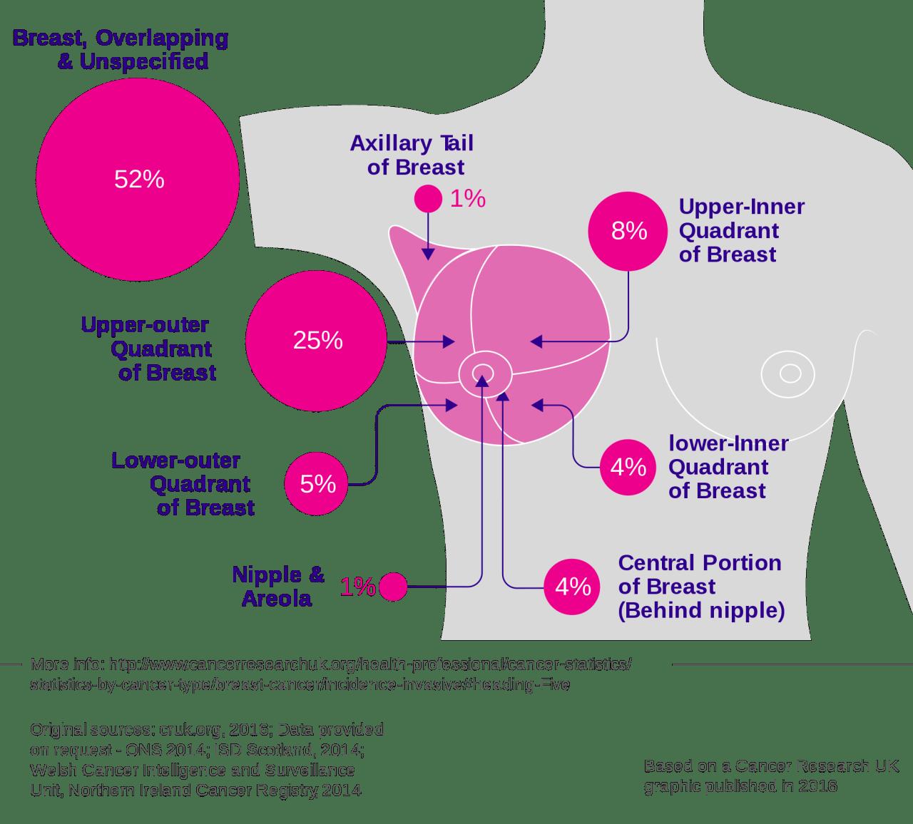 hight resolution of axillary tail diagram