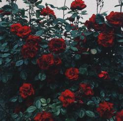 grunge rose tumblr