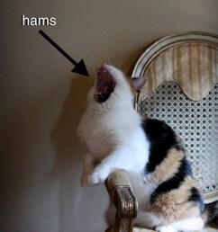 hams diagram [ 770 x 1024 Pixel ]