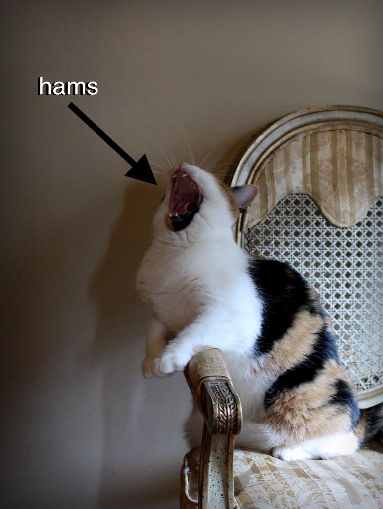 hight resolution of hams diagram
