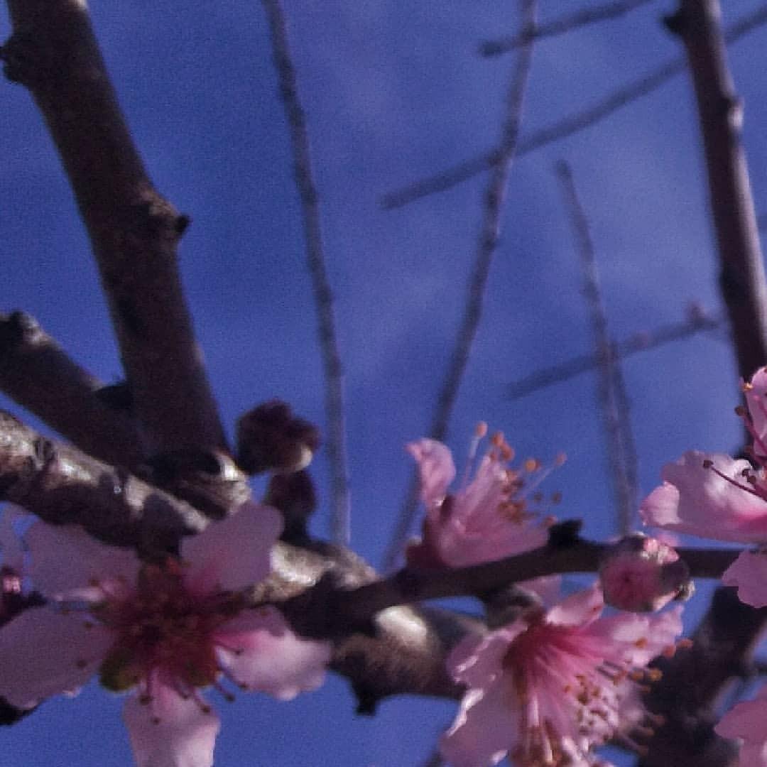 #springtime #lightwords #branch #flower #tree #season #flora #nature #bud #petal #blooming #garden #growth #outdoors #springtime...