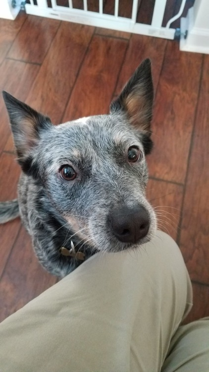 a dog healer  Tumblr