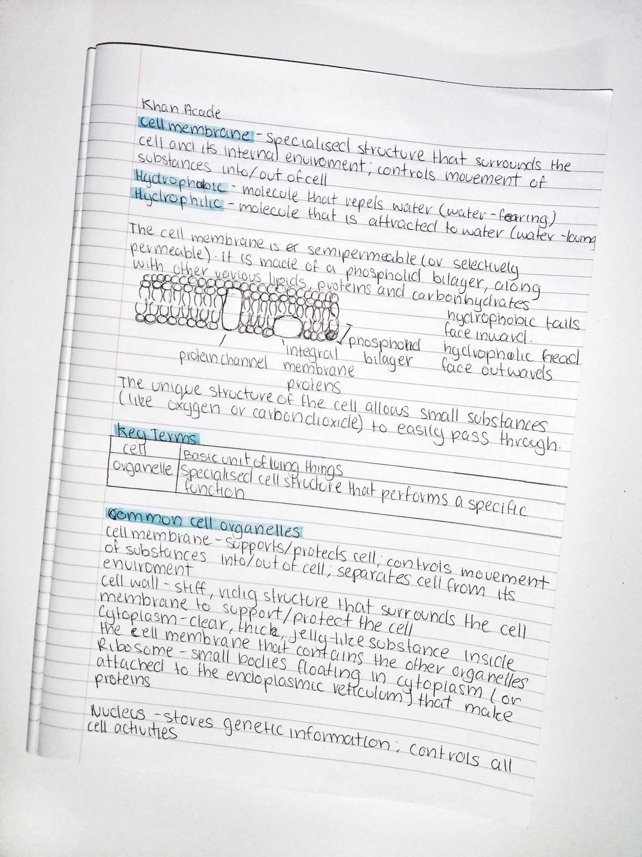 Studyblr Edublr